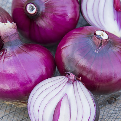 Red Zeppelin Onion