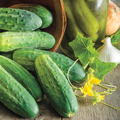 Gurney's<sup>&reg; </sup>Perfect Pickle Hybrid Cucumber