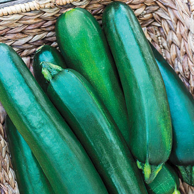 Gurney's<sup>®</sup> Pride Improved Zucchini Hybrid Summer Squash