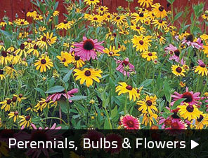 Perennials, Bulbs & Flowers