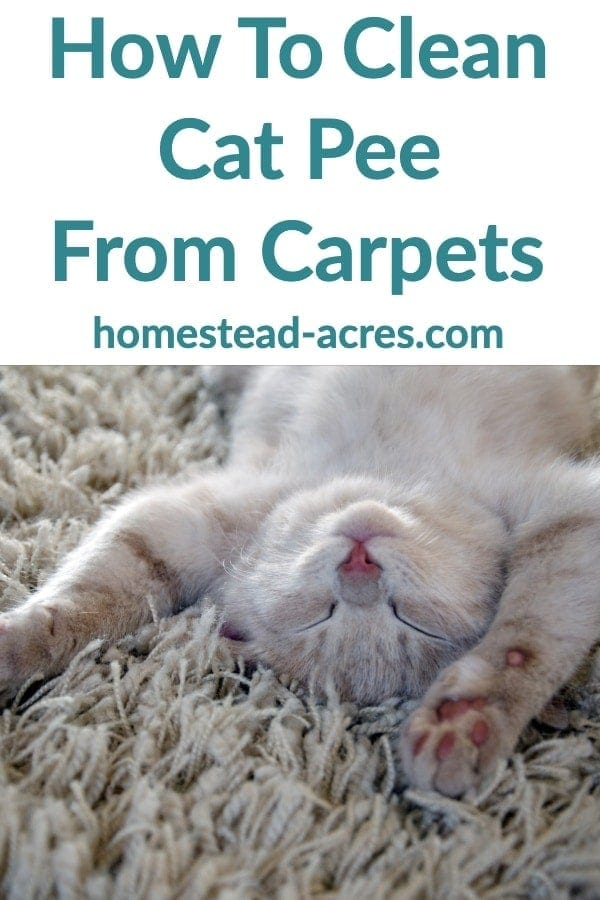 How To Clean Cat Pee From Carpets