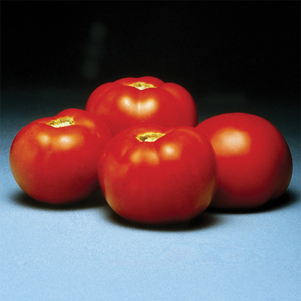 Better Bush Hybrid Tomato Hybrid Horticultural Products