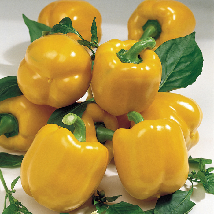Goliath Goldrush Hybrid Pepper