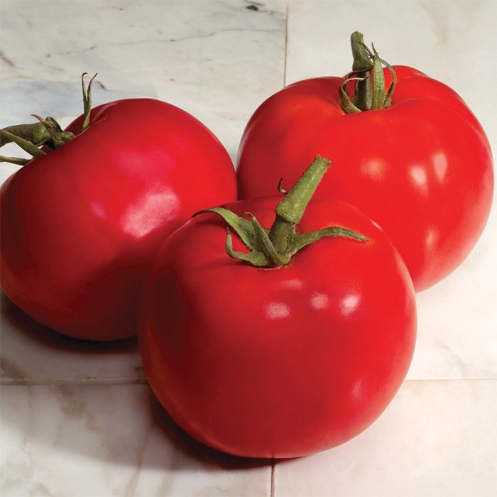 Charger Hybrid Tomato