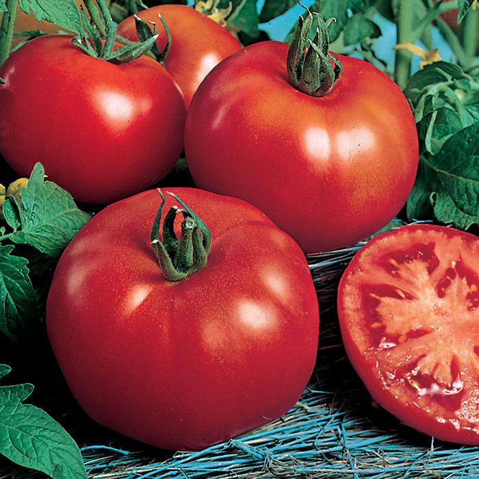 Rutgers Select Tomato