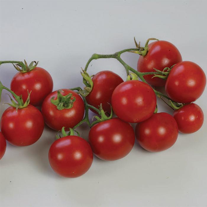 Sweet N Neat Scarlet Tomato