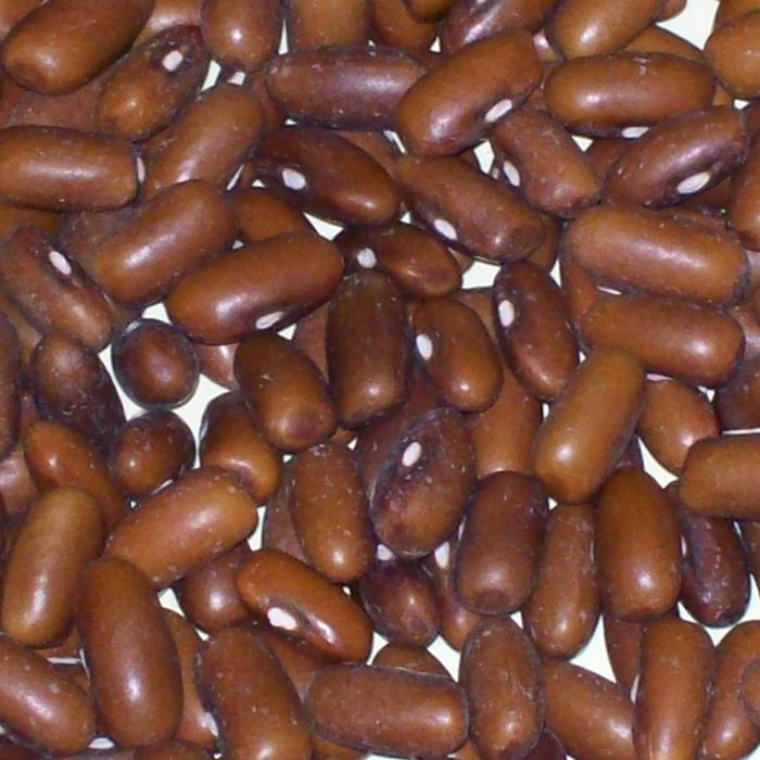 Burpee Stringless Bush Bean