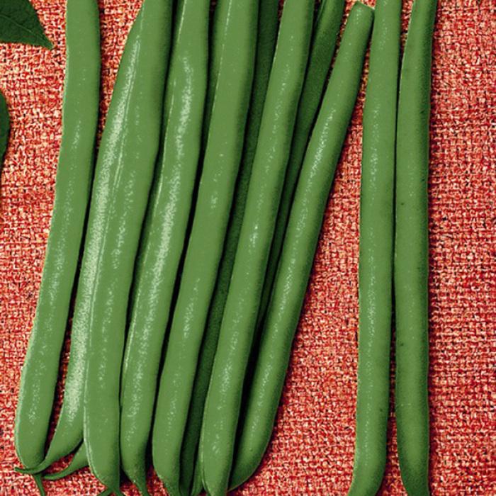 Tendergreen Improved Bush Bean