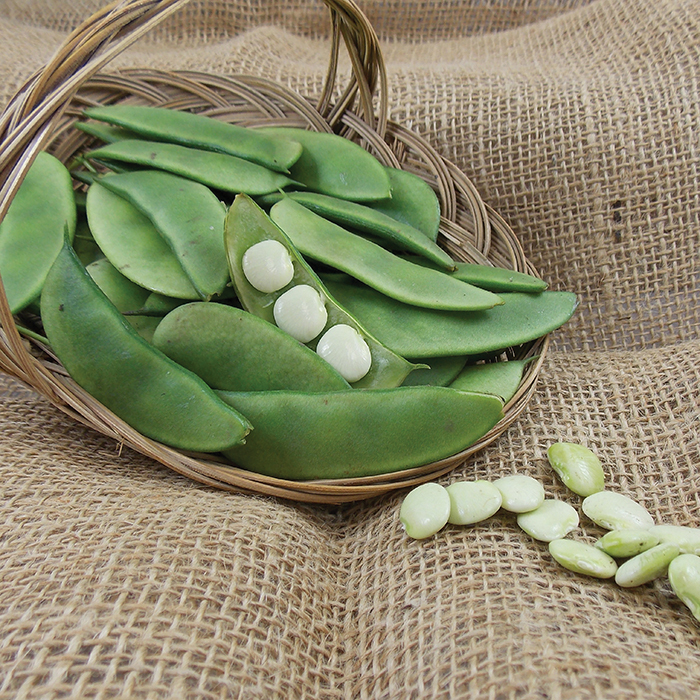 Thorogreen Early Lima Bean
