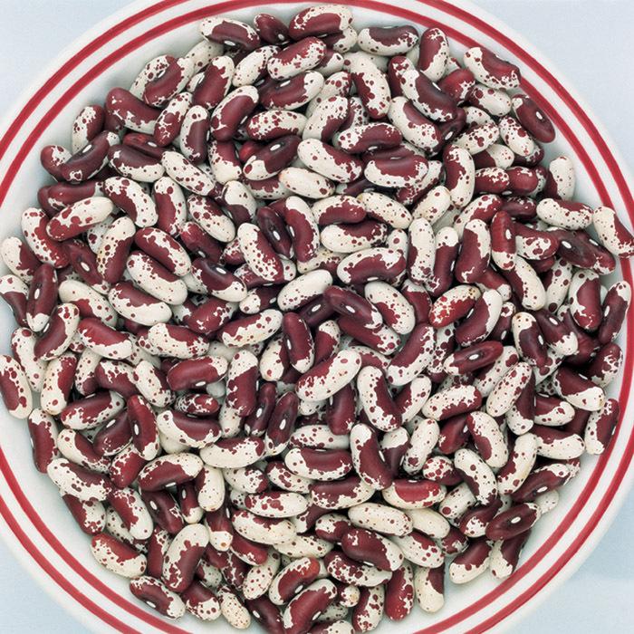 Jacobs Cattle Bean