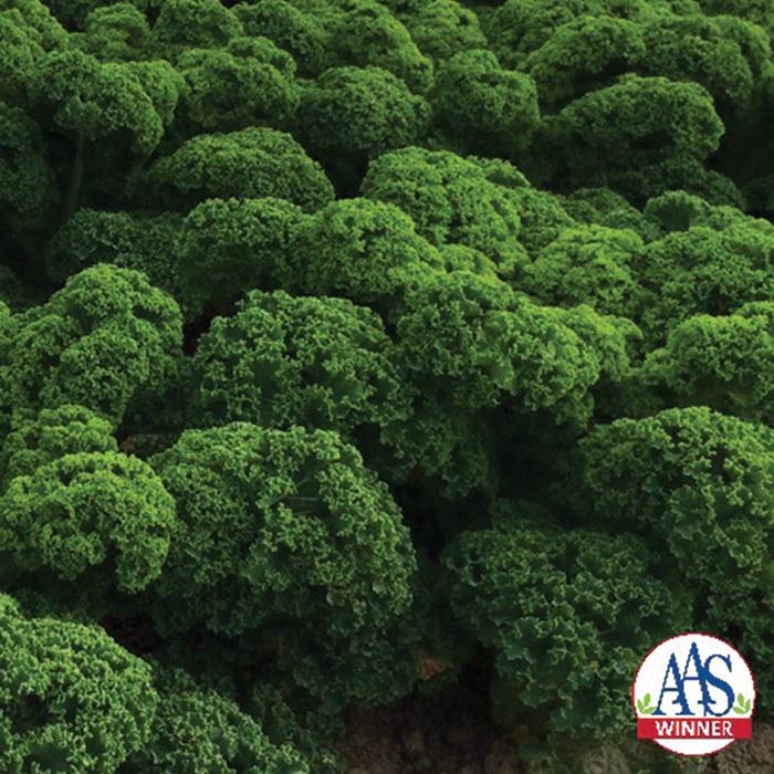 Prizm Hybrid Kale