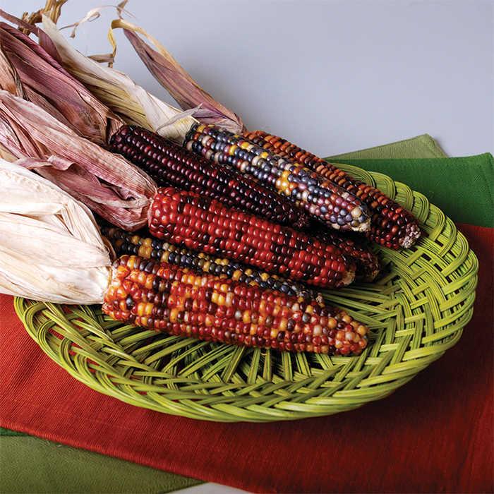Fiesta Ornamental Corn