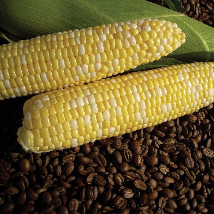 Cuppa Joe Bicolor Hyb Sweet Corn