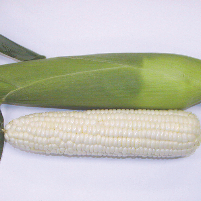 Sugar Pearl White Sweet Corn