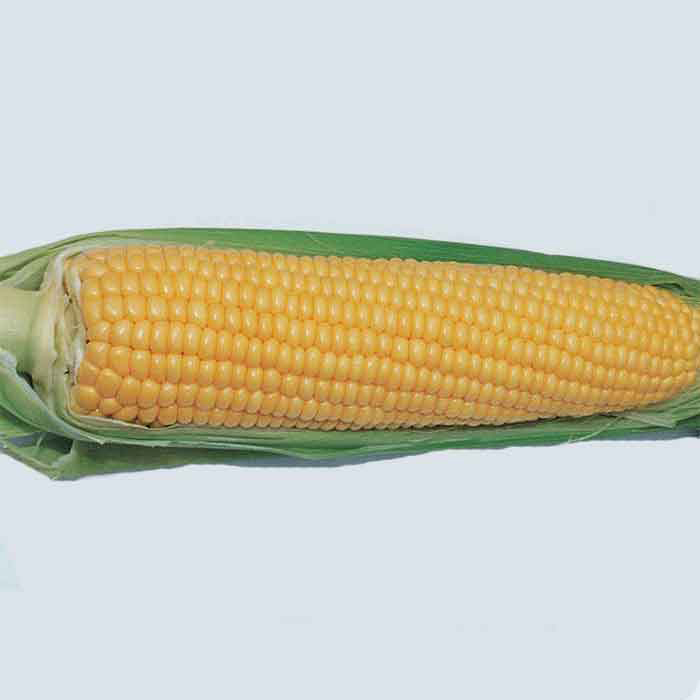 Early Extra Sweet Hybrid Sweet Corn