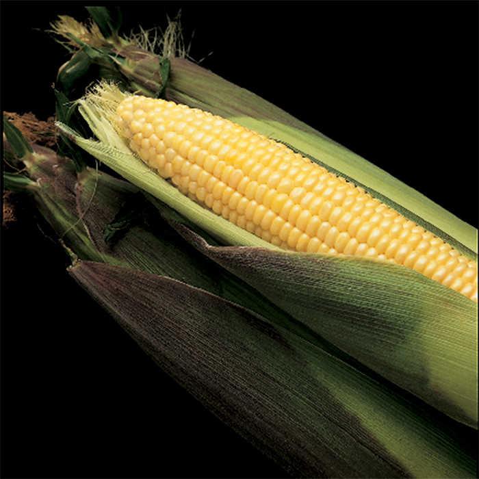 Kandy Korn Hybrid Sweet Corn