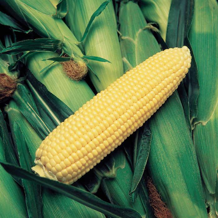 Krispy King Sweet Corn