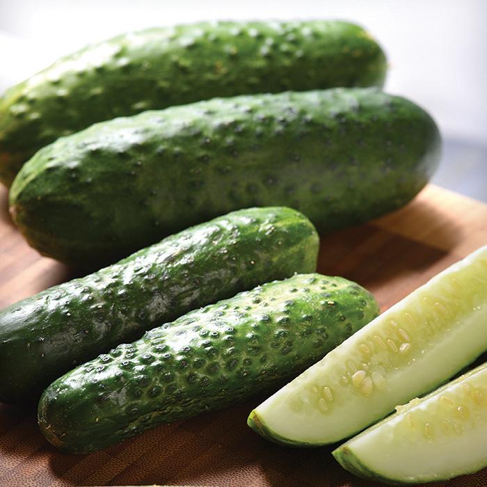 Gerking Hybrid Cucumber