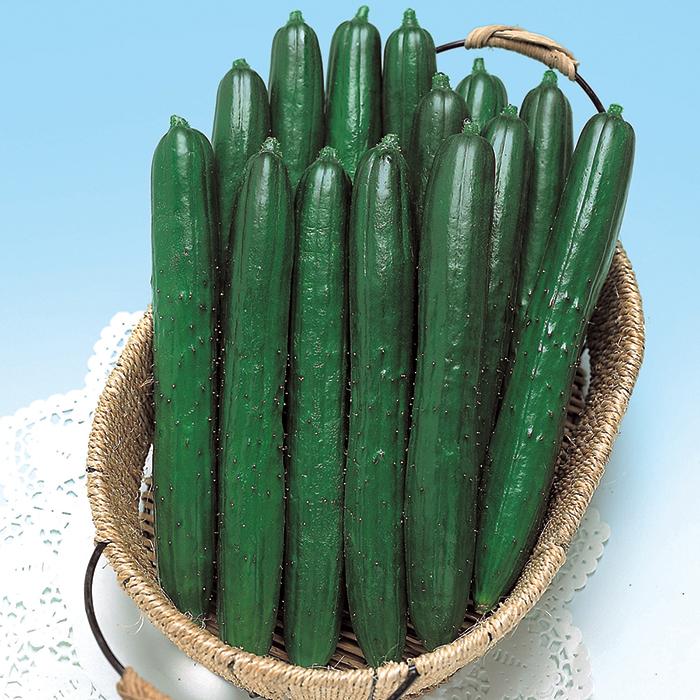Summer Dance Hybrid Cucumber