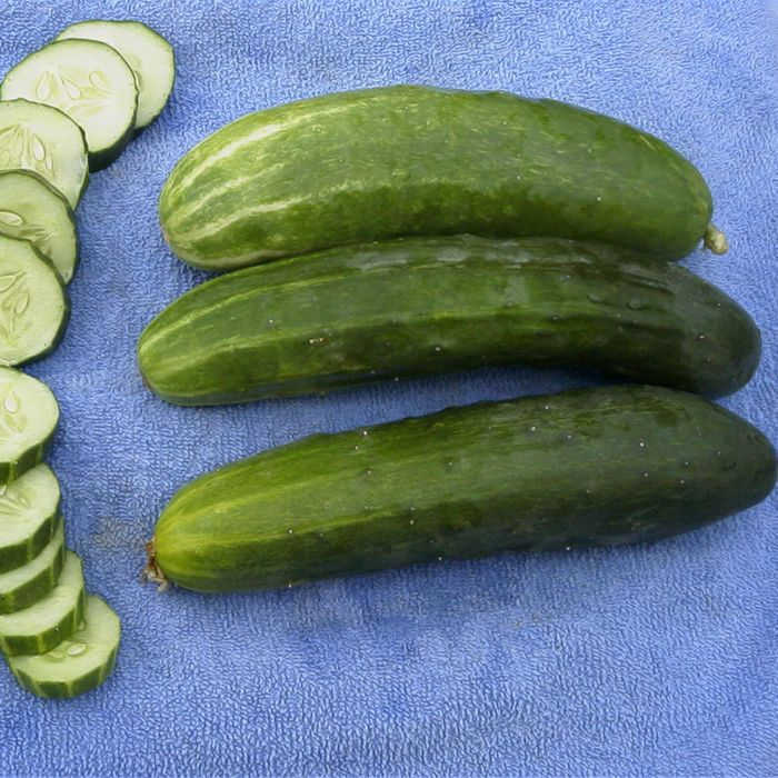 Bush Crop Cucumber