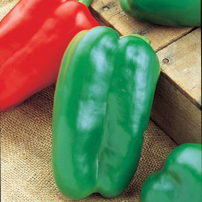 Big Bertha Hybrid Pepper