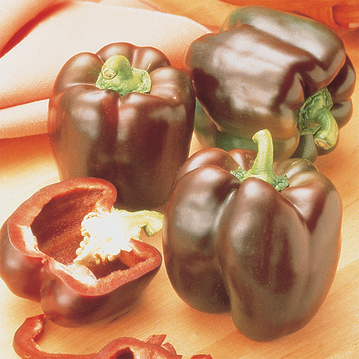 Chocolate Beauty Hybrid Pepper