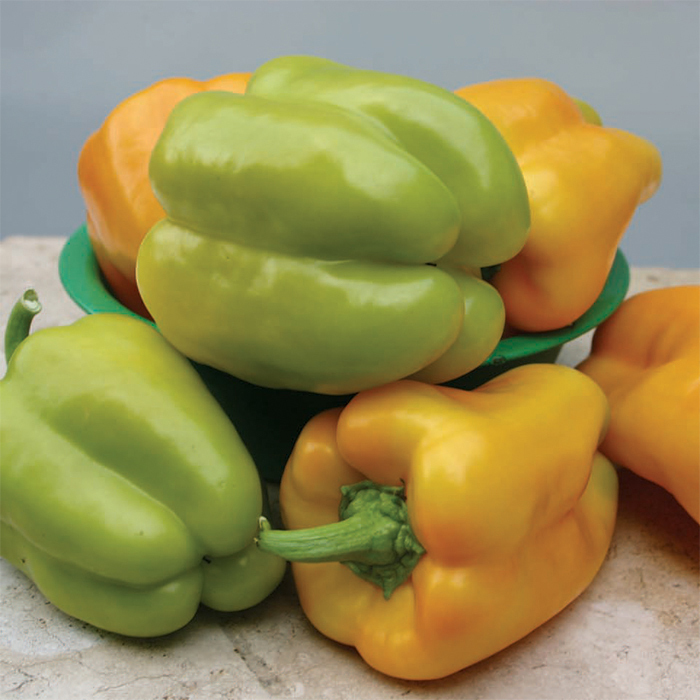 Flavorburst Hybrid Pepper