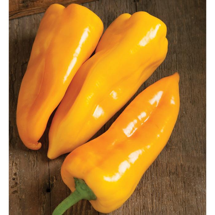 Escamillo Hybrid Pepper