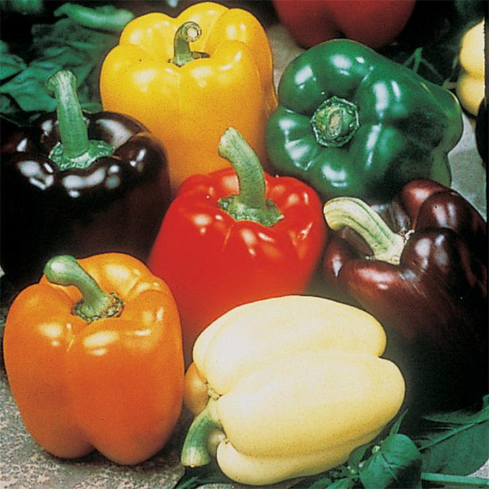 Gourmet Rainbow Mix Hybrid Pepper