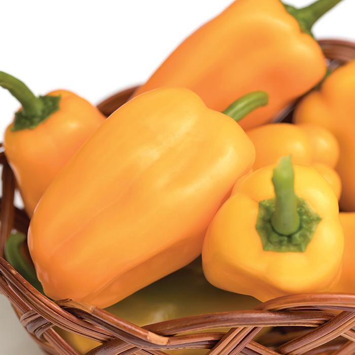 Just Sweet Hybrid Pepper