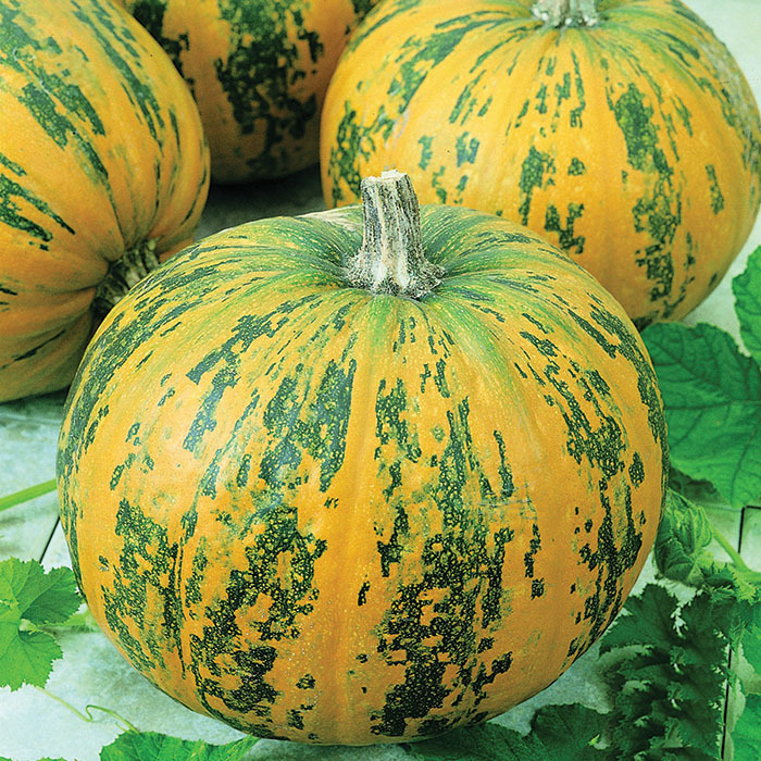 Pepitas Hybrid Pumpkin