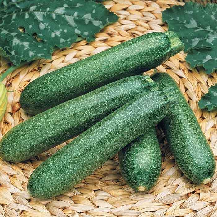Payroll Hybrid Zucchini
