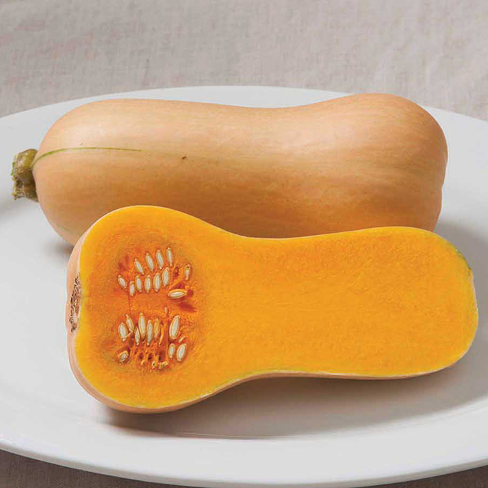 Butterscotch Hybrid Squash