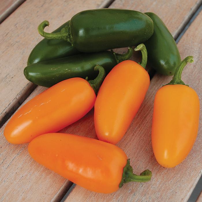 Pumpkin Spice Jalapeno Hybrid