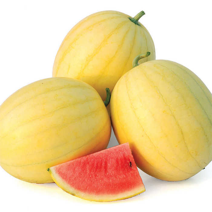 Faerie Hybrid Watermelon