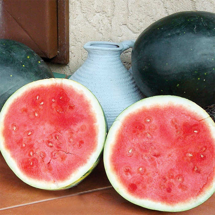 Harvest Moon Hybrid Watermelon
