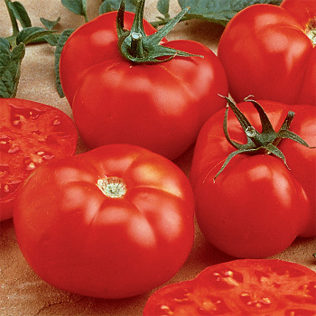 Beefmaster Hybrid Tomato - 250 Seeds