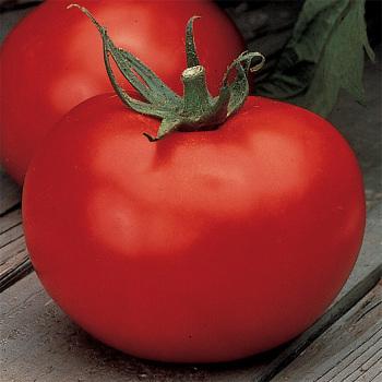 Better Boy Hybrid Tomato - Pixie Stakes