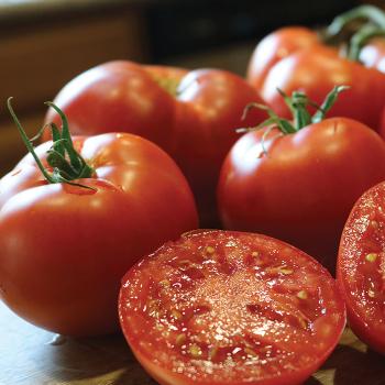Better Boy Plus Hybrid Tomato