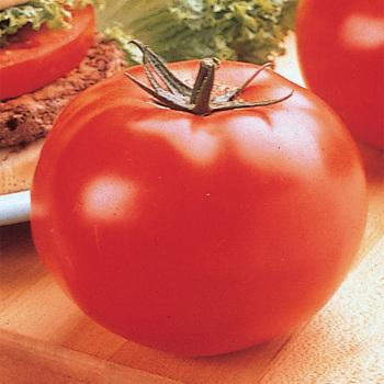 Big Beef Hybrid Tomato - Pixie Stakes