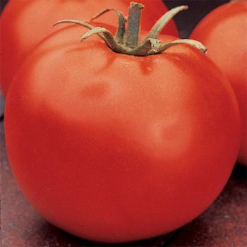 Celebrity Hybrid Tomato - Pixie Stakes