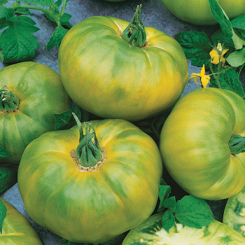 Chef's Choice Green Hybrid Tomato