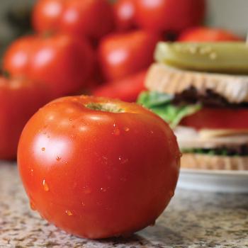 Celebrity Plus Hybrid Tomato