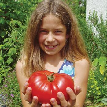 Country Taste Hybrid Tomato