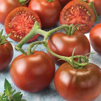 Early Choice Black Hybrid Tomato
