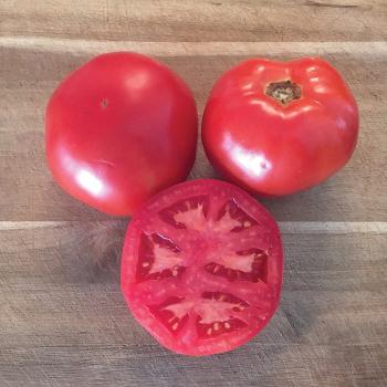 Galahad Hybrid Tomato