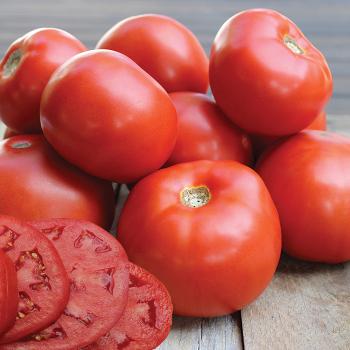 Jomestown Hybrid Tomato