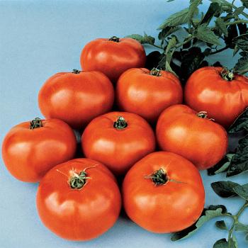 Jet Star Hybrid Tomato - Pixie Stakes