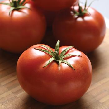 Loki Hybrid Tomato