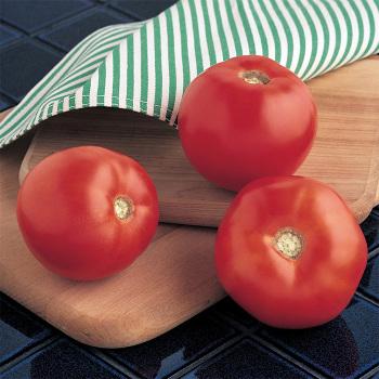 Mountain Spring Hybrid Tomato